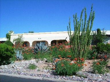 Desert landscaping plants garden sw desert pinterest for Southwest landscaping plants