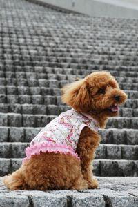 簡単に犬用のかわいいタンクトップを動画付きで作れるの型紙がPDFにて無料でダウンロードできます。