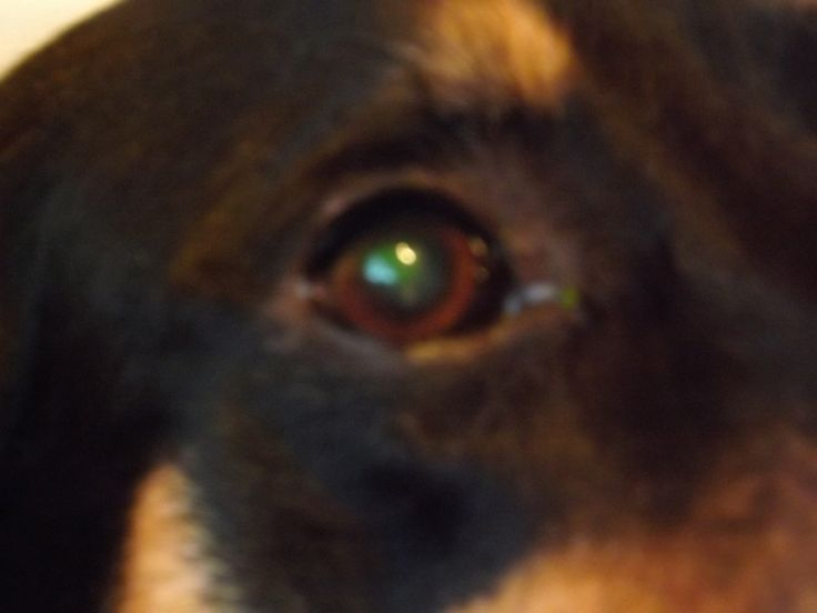 Ivy's eye all better now