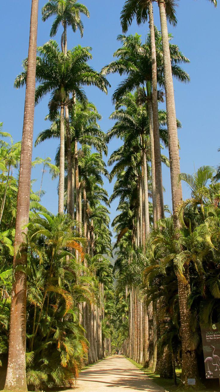 Botanical gardens, Rio de janeiro