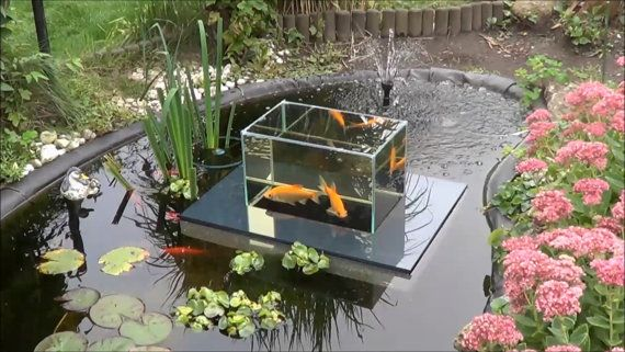 20 best images about fish observatory on pinterest for Koi pond tank