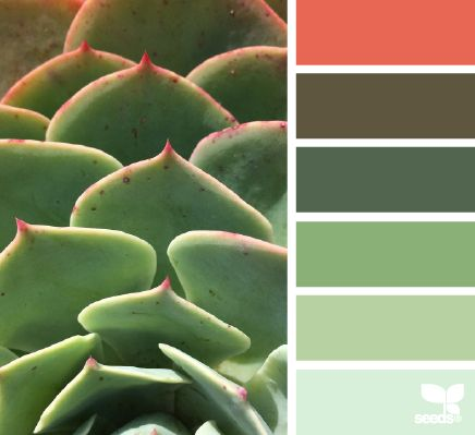 Succulent Hues - http://design-seeds.com/index.php/home/entry/succulent-hues14