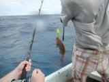 Chris' fish