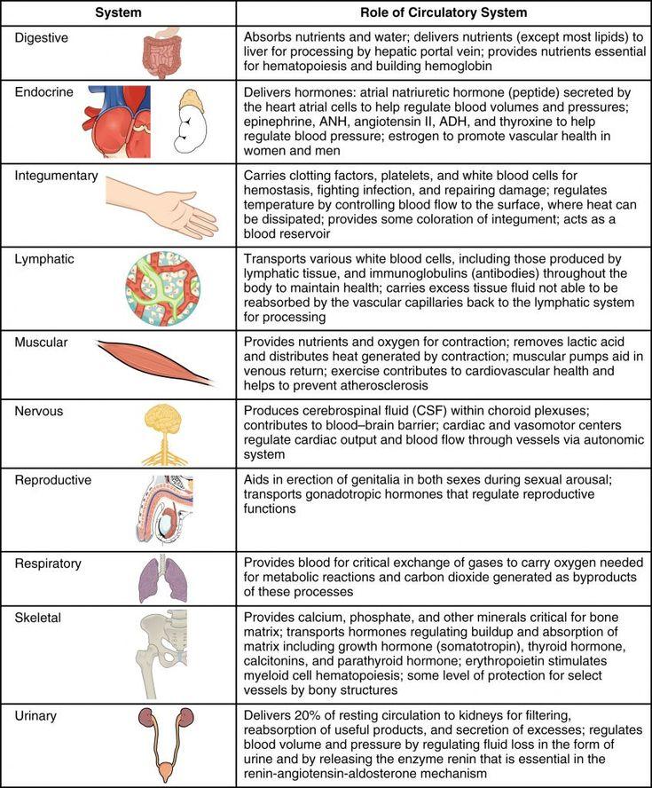 Remedii naturale pentru disfuncţii sexuale