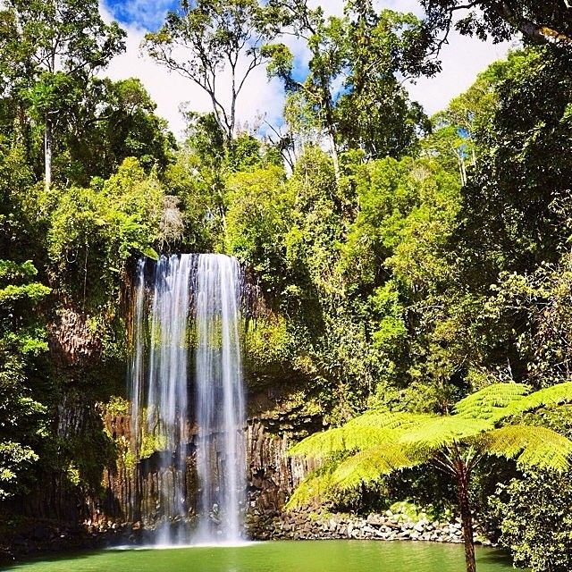 What a spot to take a refreshing dip! One of the most photographed #waterfalls in Australia, the beautiful Millaa Millaa Falls in @Queensland are surrounded by lush #rainforest and cascade into a pristine waterhole that's a popular swimming spot. A great spot to spend an afternoon, there is a grassy spot nearby that's perfect for a #picnic with a view. Photo: @elisaparkranger