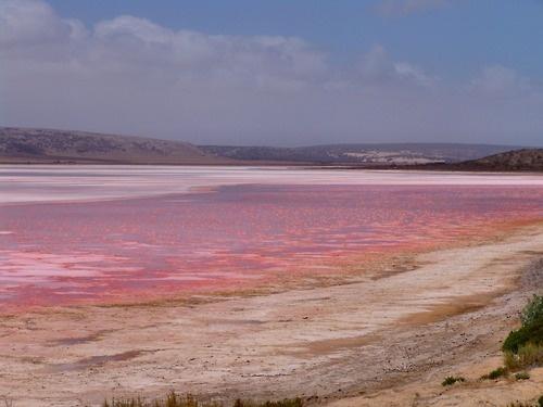 Pink lake salt lake, Kalbarri National Park, Western Australia