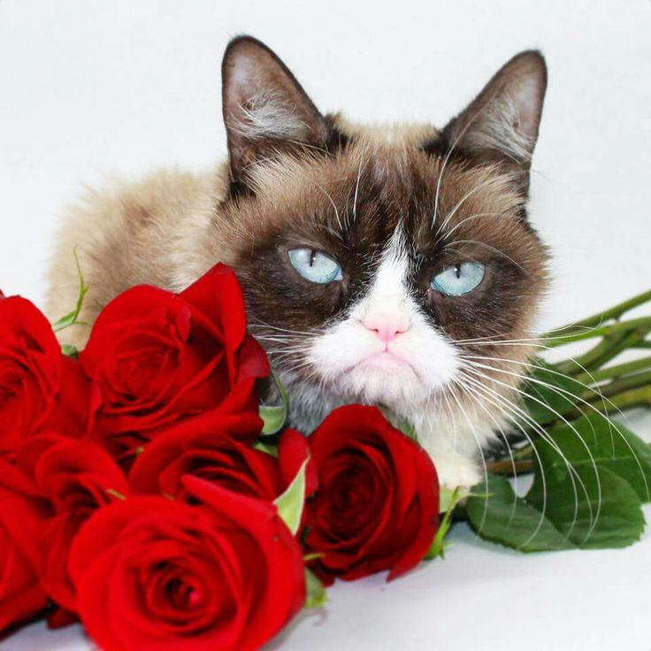 17 Best Images About Grumpy Cat -- Tardar Sauce On