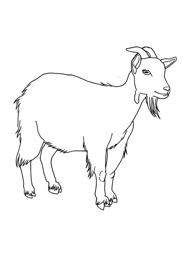 Baby Goat Coloring Pages Photos