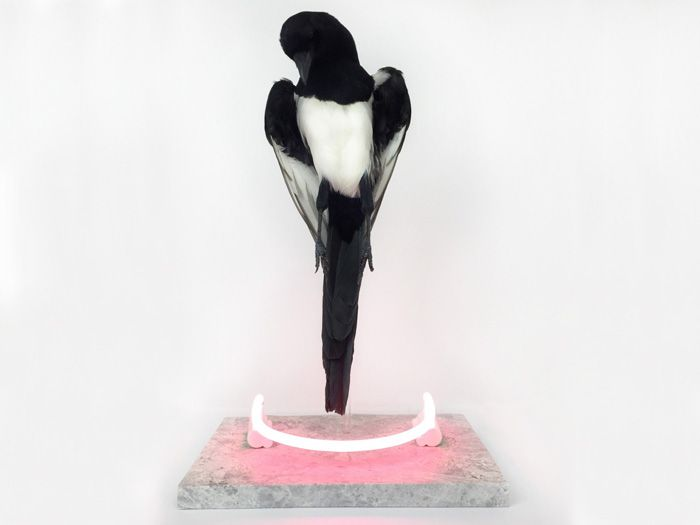 Harriet Horton is London based artist working with taxidermy, colour and neon. She lends the ancient art a surreal and contemporary, pop twist. Neon Lighting, Taxidermy, Ancient Art, Artist At Work, Sculpture, Contemporary, Artwork, Pride, Color
