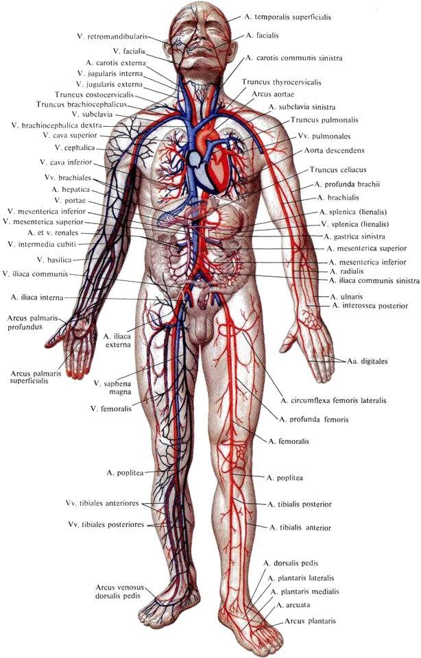 Порно медицынская анатомия