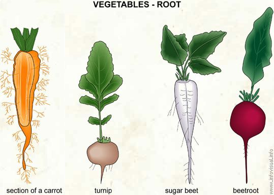 Name Root: 10+ Images About VEGETABLES AND FRUIT LIST NAMES On