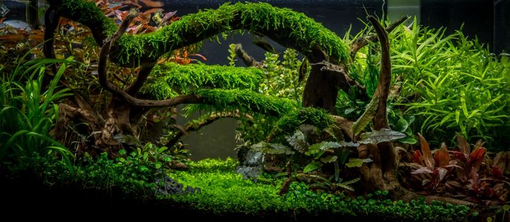 Take a look at this awesome aquascape and get inspired! You can show your own masterpiece to the world by uploading it to AquascapeAwards.com