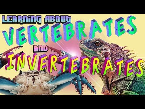 ▶ Learning About Vertebrates and Invertebrates - YouTube Funny and memorable video explaining the differences in the two. My kids have watched this a number of times.