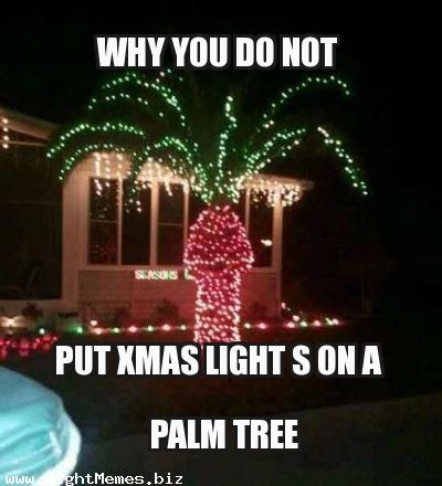 Christmas Trees Oahu