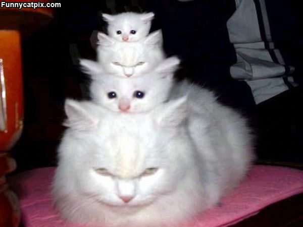 kitties :)  yes i'd be a cat lady if i had that option!