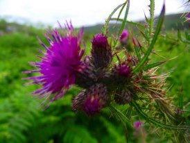 Photo courtesy of Luke Bruce via Scotland's Scenery