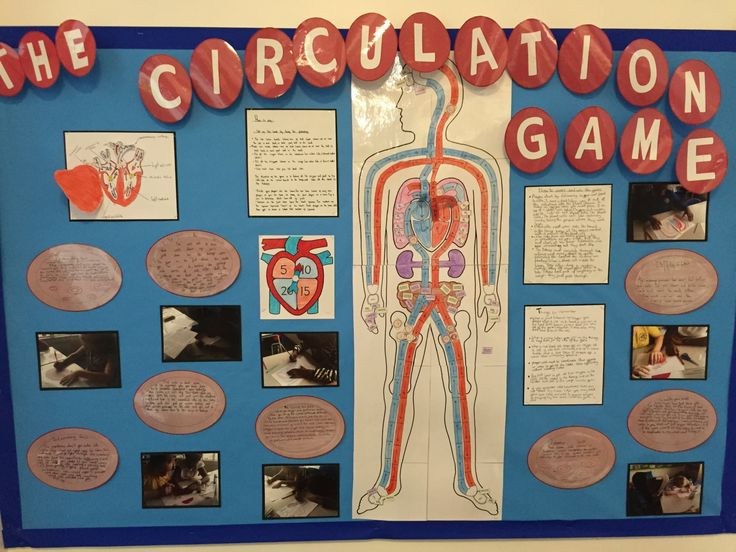 Human Body & Body Systems: ...In Science we have been learning about the human body including the heart, the circulatory and digestive systems. We have produced an interactive board game display to  educate children. This game shares interesting facts about the circulatory system and the important job it does to transport oxygen, nutrients and minerals around your body to make the body work...interactive board game ...