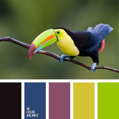 amarillo y verde, azul turquí, burdeos, color amarillo verdoso, color burdeos pálido, color lila, colores de una ave tropical, colores del tucán, combinación de colores, elección del color, lila oscuro, negro y azul oscuro, negro y verde.