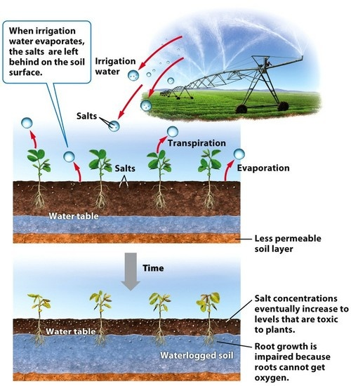 Irrigation induced salinization and waterlogging over for Soil salinization