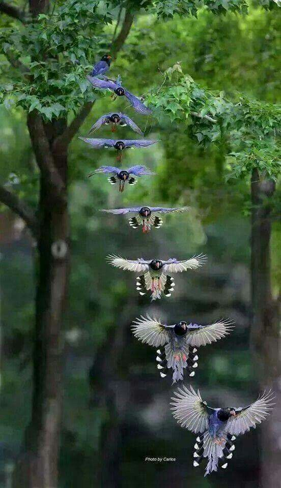 Nature bird flying