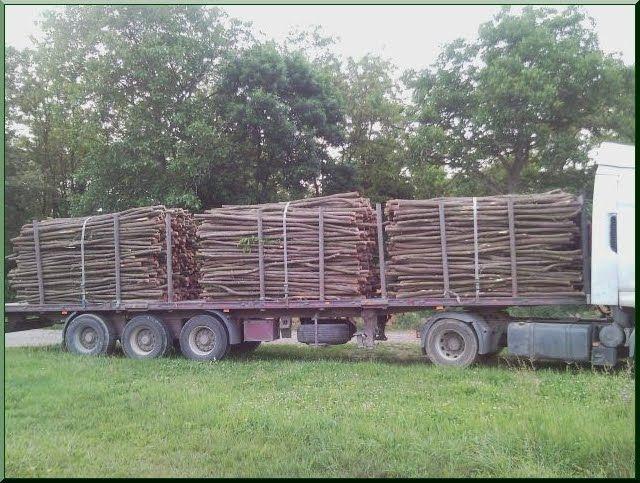 Weidezaun - Akazien Holz Ildare