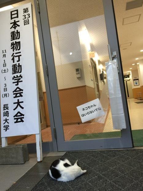「猫ちゃん入らないでね」www                                                       …