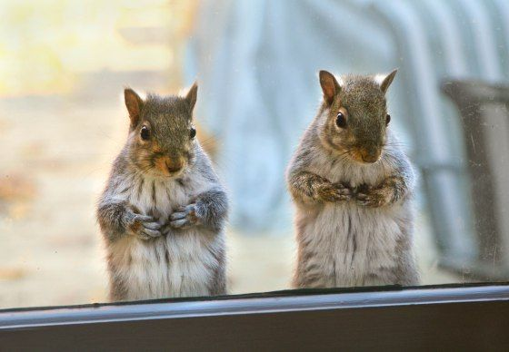 Anything good to eat in there? (We have one of those kind of squirrels )
