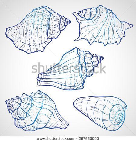 Hand drawn seashells, ink style vector illustration