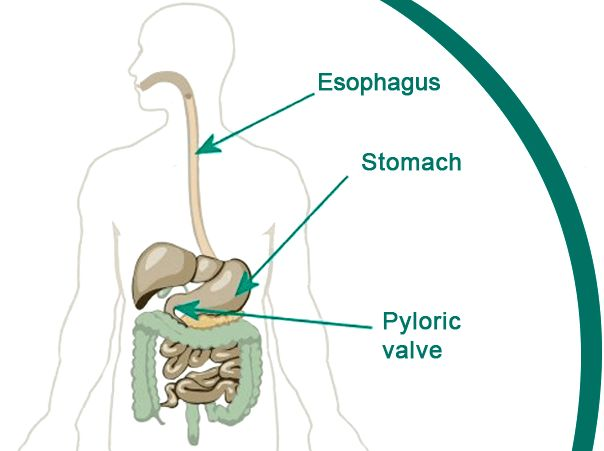 Does The Vagus Nerve Control Gastroparesis? What else does ...