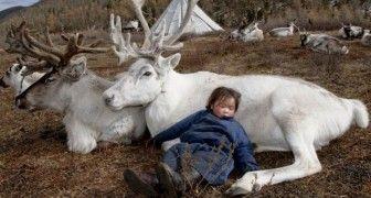 Le renne rappresentano animali molto amati dai bambini ma anche dagli adulti, merito soprattutto delle numerose illustrazioni e deiracconti che le raffigurano tra montagne innevate o come allegri…