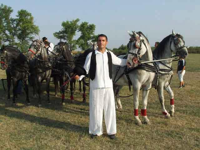 Horses and carriages, Vojvodina, Serbia