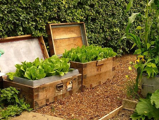 Another version of container garden using crates- great if you have dogs or gophers