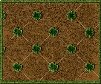 How Many Grass Plugs Do You Need For Your Lawn -