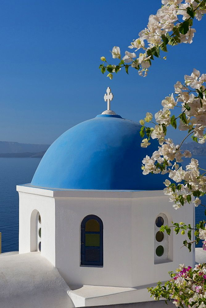 Bougainvillea around the Church of St. Nicholas in Oia, Santorini, The Cyclades, The Aegean, Greek Islands, Greece, Europe