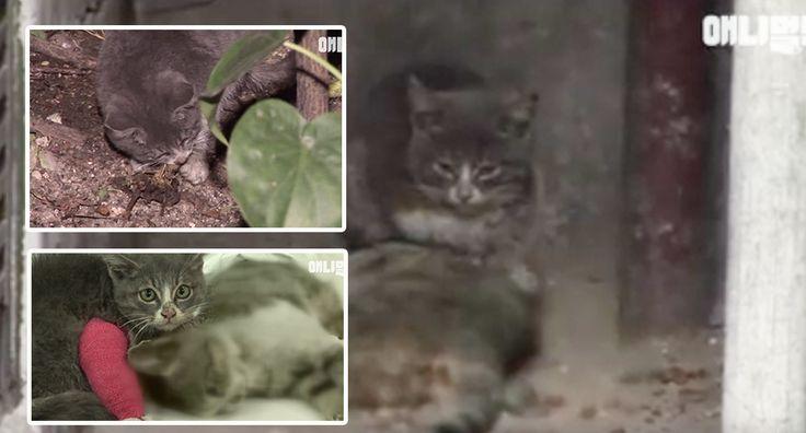 Video: Jumpa Daging & Beri Pada Bangkai Ibunya Anak Kucing Ini Cuma Makan Ranting     Video: Jumpa Daging & Beri Pada Bangkai Ibunya Anak Kucing Ini Cuma Makan Ranting  Sebuah video merakamkan betapa kasihnya seekor anak kucing kepada ibunya biarpun ibunya itu sudah mati. Dalam video yang dikongsi oleh laman Facebook SBS TV itu kucing berkenaan dilihat berada di dalam satu sudut bangunan menemani bangkai ibunya.    Seorang lelaki dikawasan kejiranan itu berkata dia selalu melihat anak kucing…