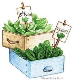 Salad Garden and Flowerpot Birdbath: Two DIY Garden Projects from Gooseberry Patch