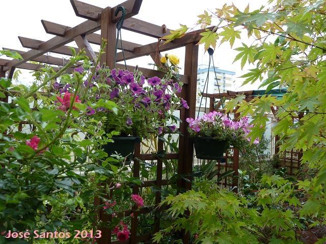 My garden - June 2013