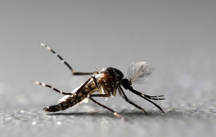 Florida voters conflicted over Zika-fighting mosquitoes - http://www.sogotechnews.com/2016/11/10/florida-voters-conflicted-over-zika-fighting-mosquitoes/?utm_source=Pinterest&utm_medium=autoshare&utm_campaign=SOGO+Tech+News