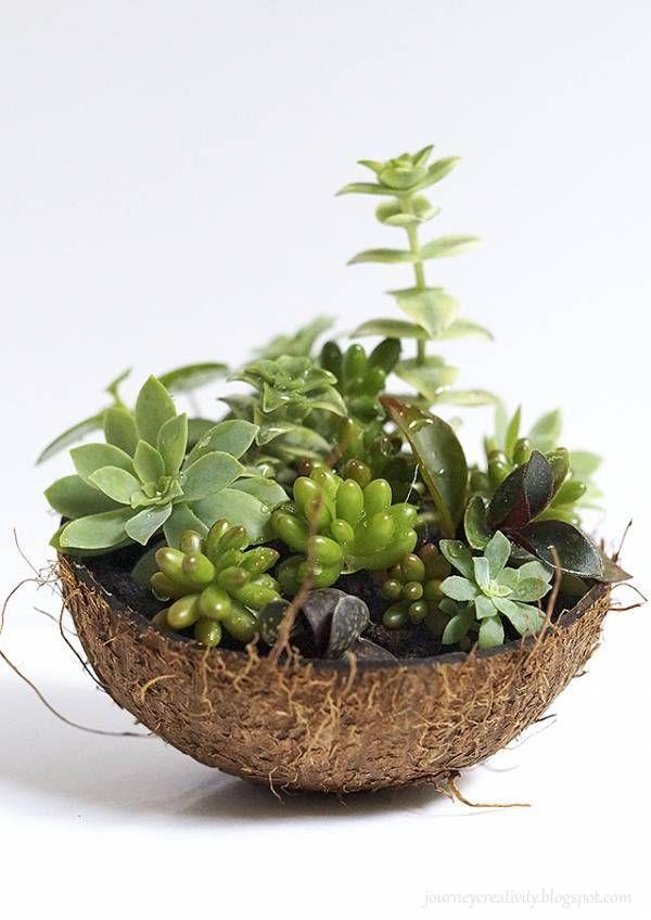 Diy Coconut Succulent Pot Succulent Pots Succulents Ornamental Plants