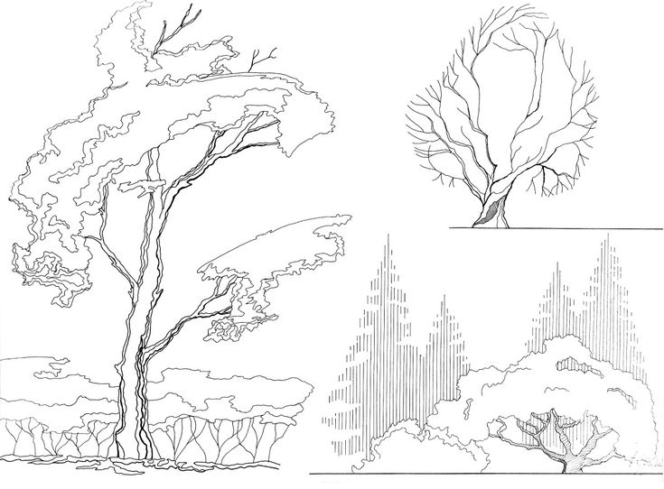 Architecture Drawing Trees 417 best alberi/tree images on pinterest | landscape design