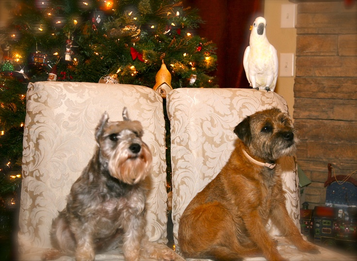 Christmas with the pets -