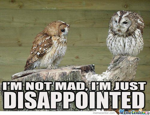 Owl Memes. Best Collection of Funny Owl Pictures