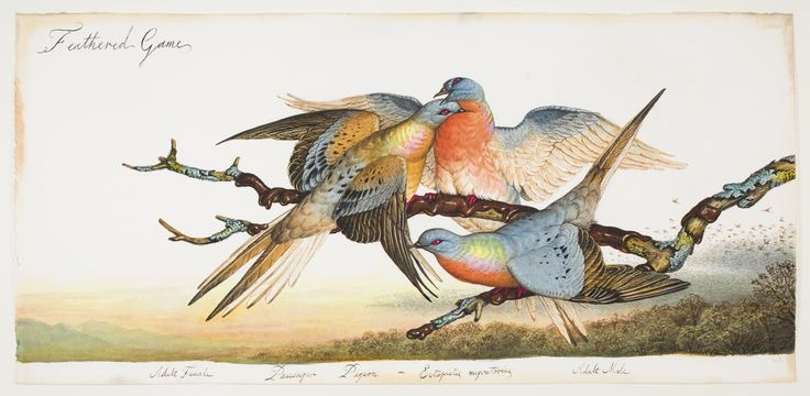 In his book about the passenger pigeon, the naturalist Joel Greenberg sets out to answer a puzzling question: How could the bird go from a population of billions to zero in less than fifty years?