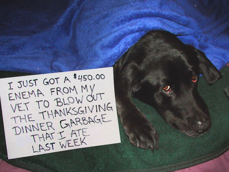 Dog Shaming Thanksgiving enema Funny Pet Confessions