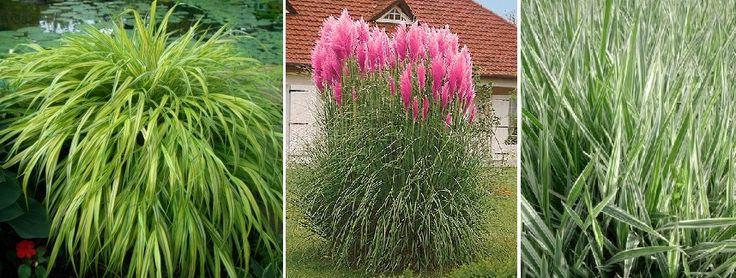 Alternative la gazon pentru o grădină plăcută cu întreţinere simplă - Sporul casei - Soluţii şi idei pentru casă şi grădină