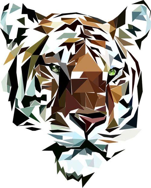 Tiger | postcard + poster