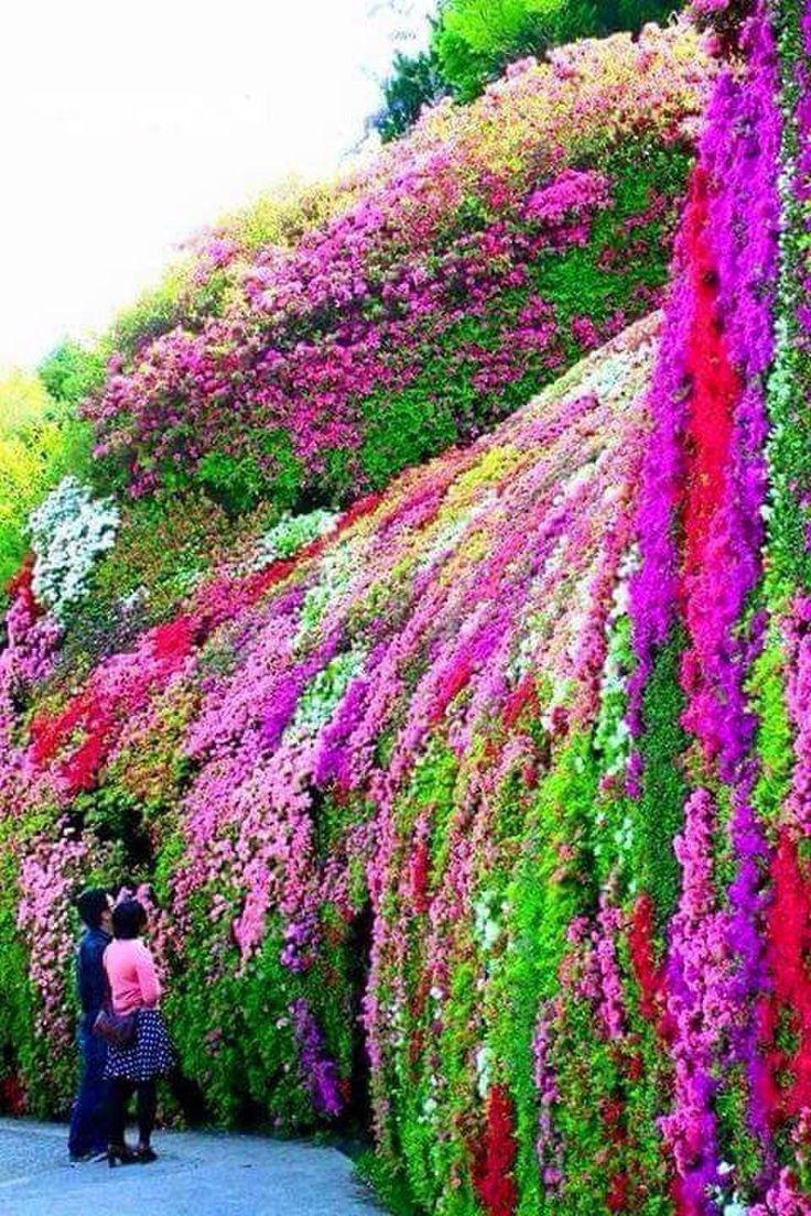 20 best astounding azaleas images on pinterest | flowers, garden