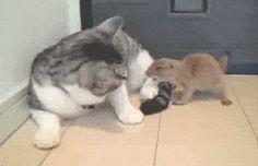 Prairie Dog Wants to Bite