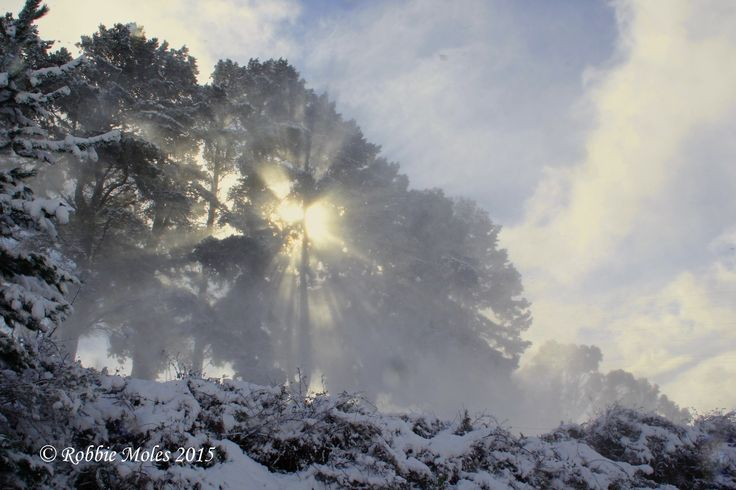 Rays through snow covered trees. The wind was blowing so strong along with the snow causing this effect.