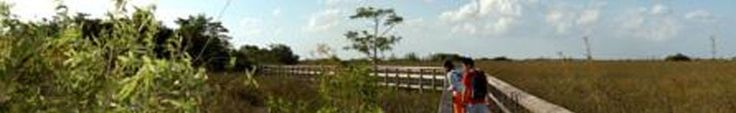 Camping at Everglades National Park's Flamingo Campground...$16 per night.